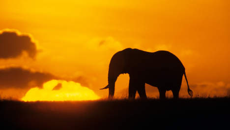 STEUN | De olifant en de slak